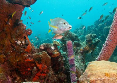 Diving with Scuba Bikers